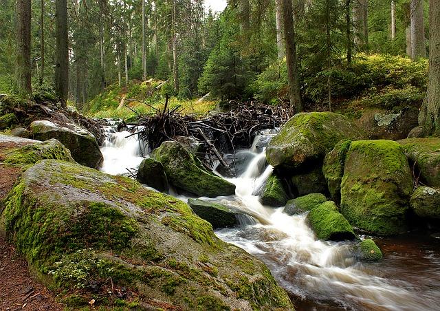 řeka v lese